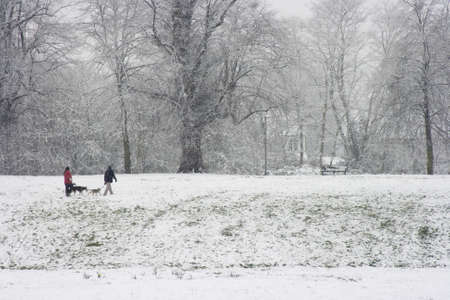 Snow falling in park with dog walkers