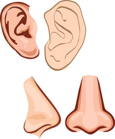 Ear and nose Illustration