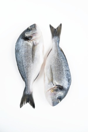 daurade: Two Dorado fish isolated on white background