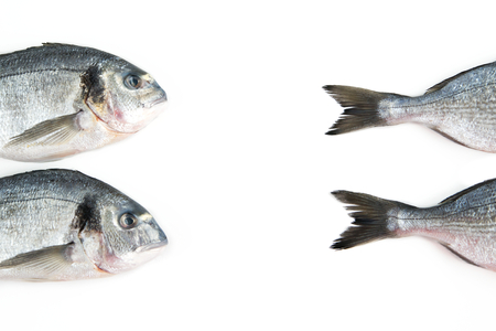 sparus: Two Dorado fish isolated on white background, creative concept