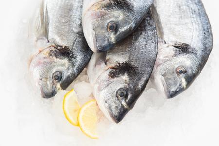 sparus: Dorado fish in ice with lemon
