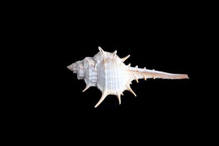 sea slug: Isolated snail shell