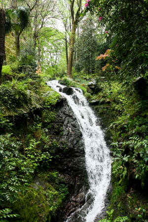 buch: A small waterfall in the subtropical forest in the rain.