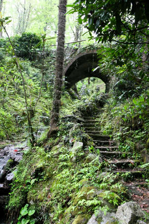 subtropical: Old abandoned staircase leading to a small tunnel in the subtropical rain forest.