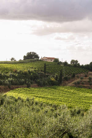 buch: Summer Tuscan green hills with vineyards. On the horizon - the house among trees