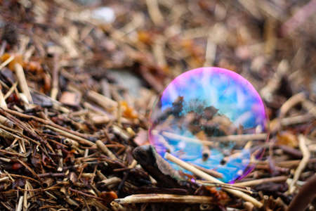 polychromatic: Rainbow bubble lying on fragments of twigs, reeds and seaweed on the shore.