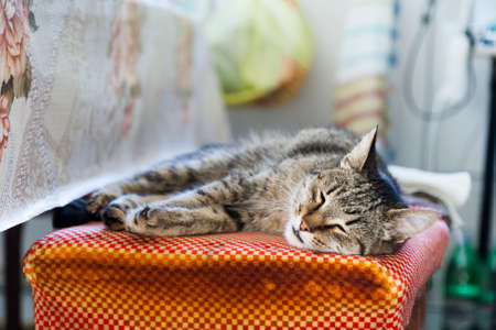 rustic kitchen: Motley cat sleeps on a rustic kitchen.