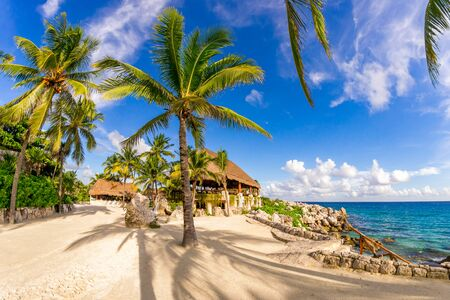 Amazing seascape with palms in Xcaret park in Mexico 版權商用圖片
