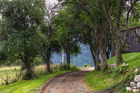 Rural dirt road among the trees in village on Zaovine Lake in Serbia