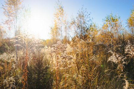Field grass and forest growth in direct sunlight in the autumn season