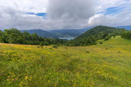 Summer landscape of wilderness green natura in Serbia
