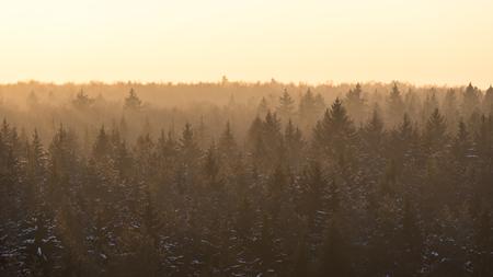 Forêt brumeuse de conifères d'épinette recouverte de neige en hiver dans les rayons du soleil dorés au coucher du soleil. Vue aérienne de face