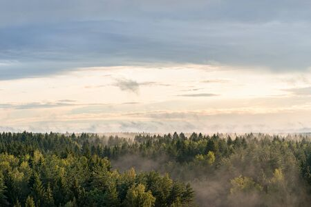 Panoramic landscape view of spruce forest in the fog