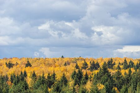 View of autumn mixed deciduous and coniferous forest. Dark dramatic clouds on the sky and yellow leaves of trees in the sunlight