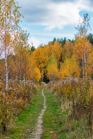 Pathway in autumn nature among orange color trees in fall season Banco de Imagens