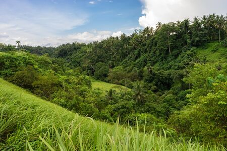 Beautiful green nature of Indonesian Bali Island. Tropical greenery, fresh grass and  palm trees
