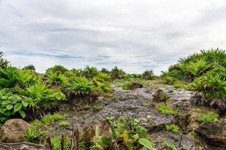 Beautiful tropical greenery vegetation grows on rocks in Tulum in Mexico. The sky is covered with clouds. Background Space for text