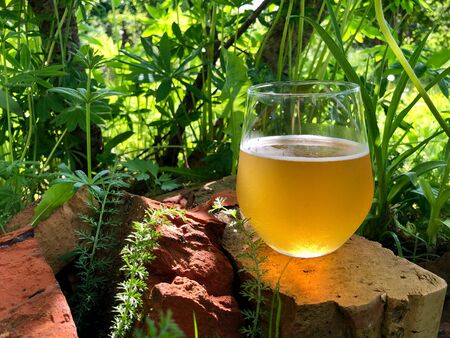 A glass of cooling craft beer in nature in summer glowing in sunlight