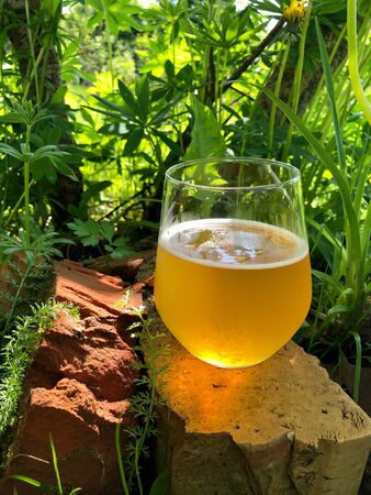 A glass of fresh  craft beer in nature in summer glowing in sunlight