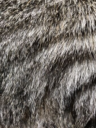 Cat hair background texture 版權商用圖片