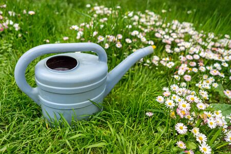 Watering can on green grass in spring garden with blooming flowers on meadow