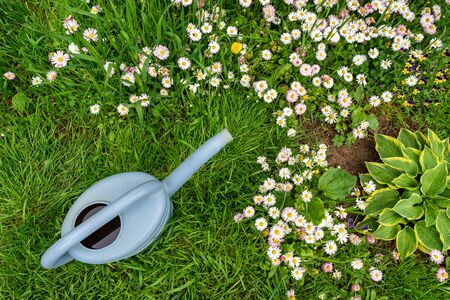 Watering can on green grass in spring garden with blooming flowers on meadow. View directly above 版權商用圖片