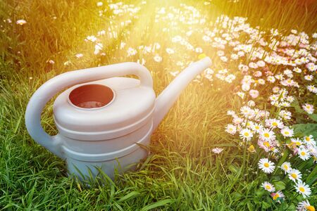 Watering can on green grass in spring garden with blooming flowers on meadow in sunlight