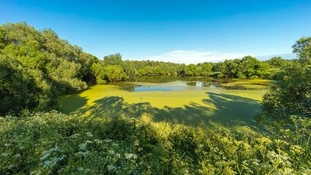 Summer landscape panorama of russian nature. View on pond between green trees overgrown with duckweed and blooming grass under blue sky in sunny day 版權商用圖片