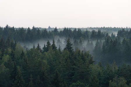 Panoramic view from the height on dark spruce forest in the fog 版權商用圖片 - 152797346