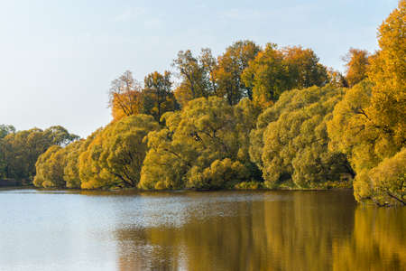 Yellow and orange autumn trees on waterside of lake in fall season in sunny weather nature landscape 版權商用圖片