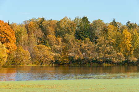 Yellow and orange autumn trees landscape on waterside of river in fall season in sunny weather 版權商用圖片