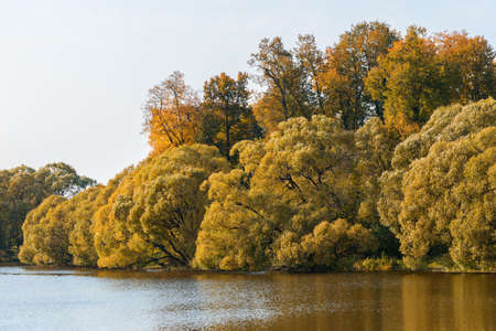 Autumn trees on waterside of pond in fall season in sunny weather nature landscape 版權商用圖片