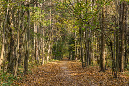 Path in autumn forest among trees in fall sunny day