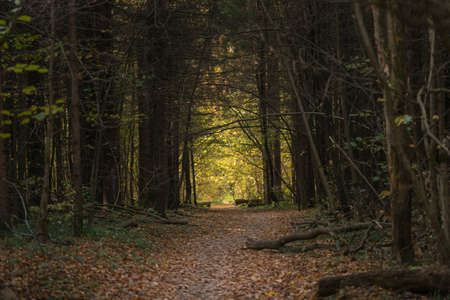 Pathway in autumn forest among trees 版權商用圖片