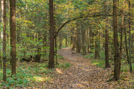 Path in autumn forest among trees in fall season