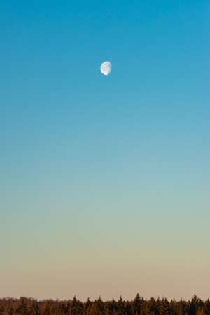Moon on blue sky above forest horizon in the morning 版權商用圖片