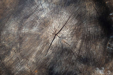 An old round sawn tree with cracks. Textured natural vintage background