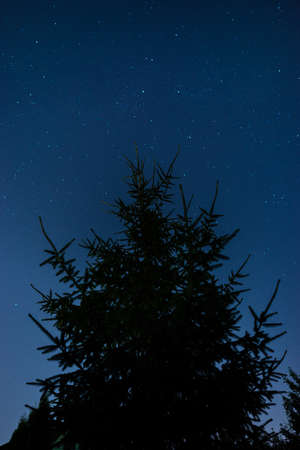 Fir tree against the stars on night sky