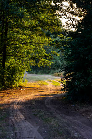 road in the woods photo