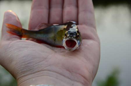 super smile fish perch photo