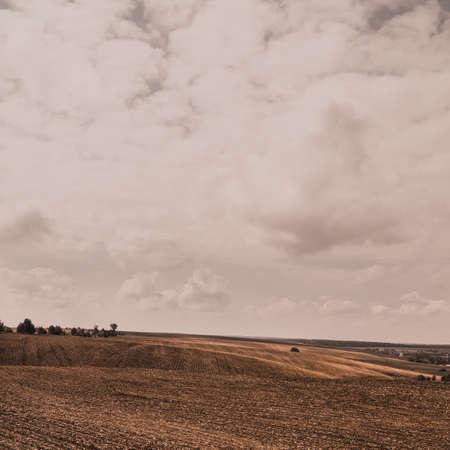 Orange summer autumn wheat field on large wide hills under a light cloudy sky. Фото со стока