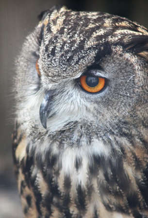 watchful: Watchful Owl Stock Photo