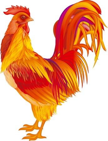 animal cock: gallo rosso-giallo su sfondo bianco Vettoriali