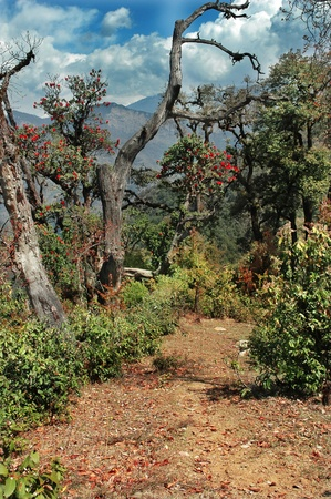 backwoods: road in a forest of flowering trees rhododendrons