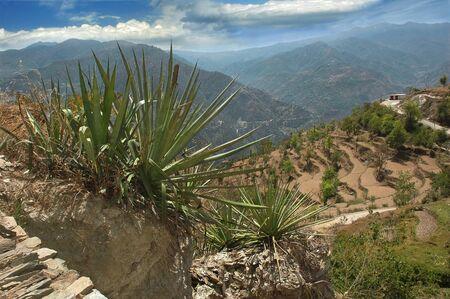 agave: agave en el paisaje de montaña en el Himalaya