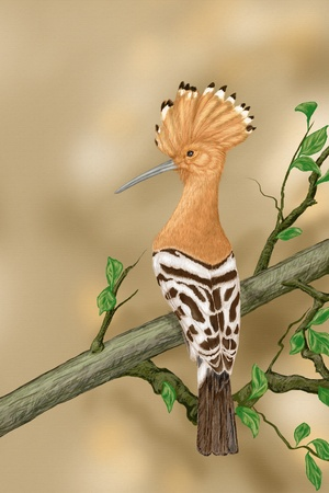Crested hoopoe sitting on a tree branch, Illustration