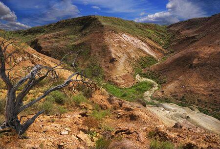 beautiful landscape slopes plateau Ustyurt; Haloxylon grows on rocky ledge Stockfoto