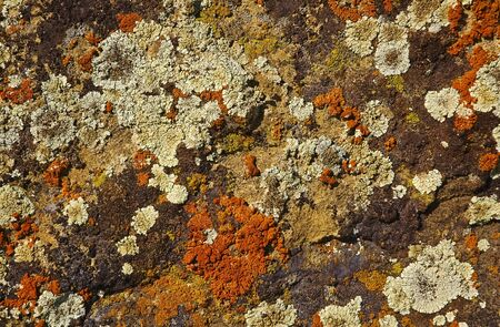 background with a colored bright lichen growing on rocks