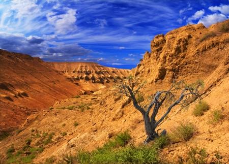 Vackra landskap sluttningarna av bergen i Ustyurt; nordöstra delen av platån i Kazakstan, Centralasien