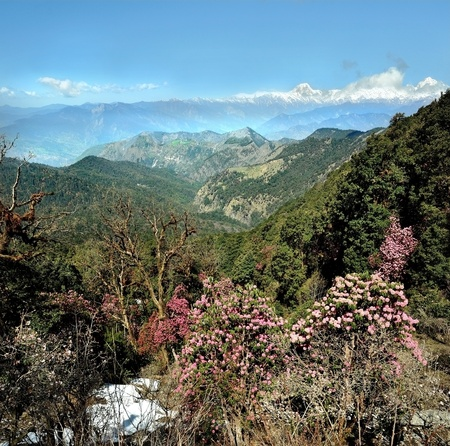 mountain ranges: rhododendrons trees against the mountain ranges of Himalayas. Uttarakhand, India Stock Photo